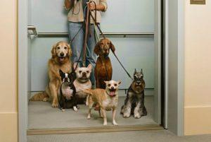 Regole da rispettare con il cane in ascensore condominiale   parti comuni